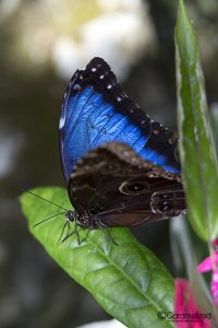 FL Natural History Musuem